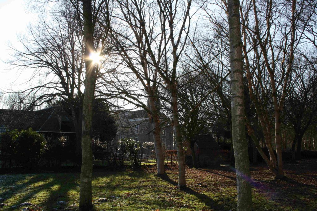 doorkijk tussen de kale bomen